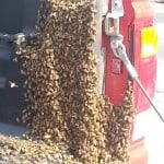 Honey Bee's take over truck